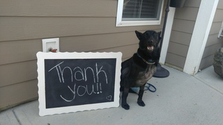PHOTOS: Zionsville K9 Jelka's recovery