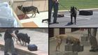 TSA dogs train to stay one sniff ahead of danger
