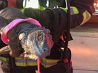 Carmel firefighters rescue pet iguana from fire