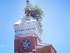 Courthouse roof tree at center of repair project