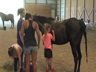 Horse camp teaches students STEM skills