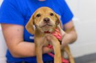 IndyHumane waiving adoption fees Saturday