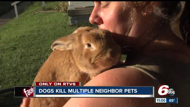 2 loose dogs kill cats, rabbit on southeast side, neighbors say
