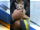 WATCH: IFD firefighter saves cat from house fire