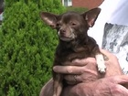 Beech Grove dog found, returned to owner