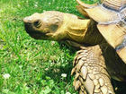 Man accused of killing pet tortoise settles