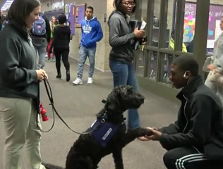 Therapy dog eases stresses of Muncie students