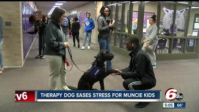 Therapy dog eases stress for Muncie students