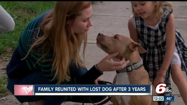 Stolen dog reunited with family three years later
