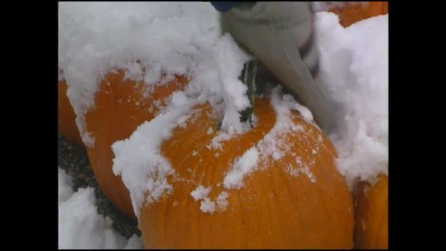 Snow in mid-October in Indianapolis- It happened in 1989