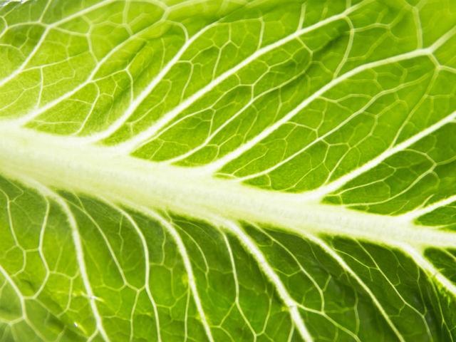 E. Coli breakout linked to romaine lettuce