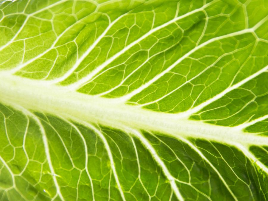 Romaine lettuce to blame for E. coli outbreak in 11 states, CDC reports
