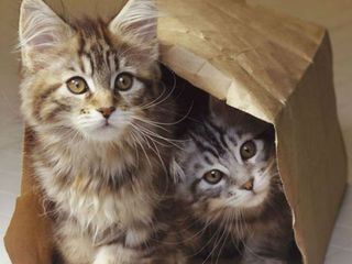 Shelter accused of freezing kittens to death