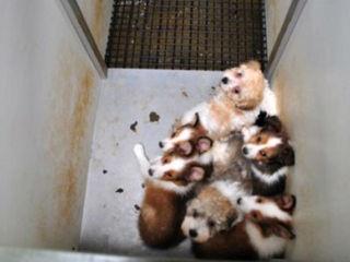 4 Ind. dog breeders on 'Horrible Hundred' list