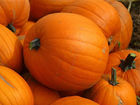 Pences sell pumpkins to benefit food bank