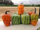 'Pumpkinsteins' put Jack-o'-lanterns to shame