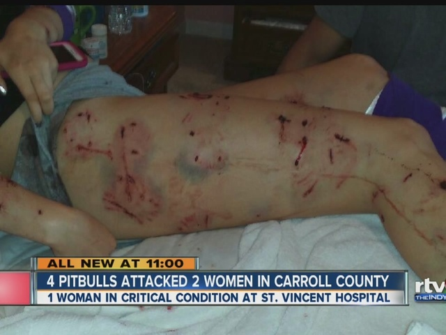 Women Attacked By Pit Bulls In Carroll County Theindychannel Com Indianapolis In