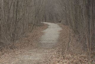 Delphi trail getting upgrades after teen murders
