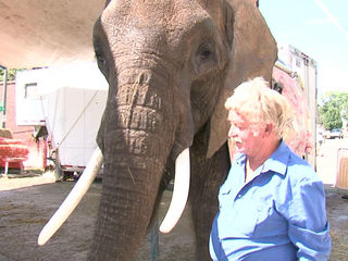 Elephant in Morgan Co. festival confiscated