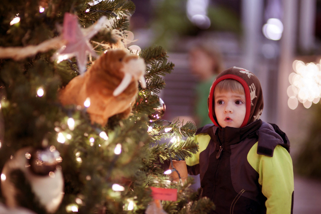 vote for christmas at the zoo on usa todays 10 best zoo lights list