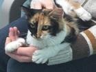 Free Johnson Co. pet adoptions in December