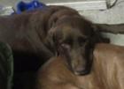 PETA offers reward in Anderson dog mutilation