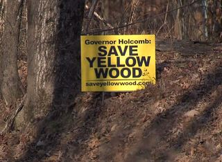 Group wants to stop state forest tree removal