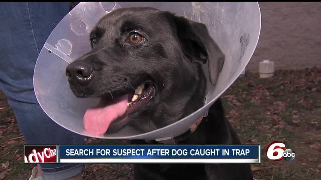 Officials looking for person responsible after dog caught in coyote trap…