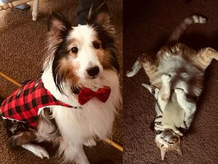 PICS: Your pets on National Dress Your Pet Day