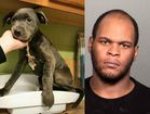 Man accused of beating puppy, breaking its bones