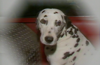 1983: Freckles the fire dog retires