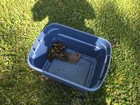 ADORABLE ducklings saved from storm drain