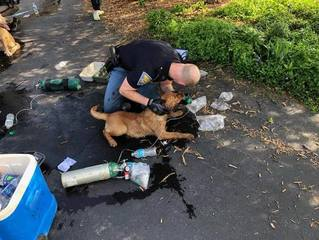 7 dogs saved from northern Indiana fire
