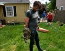 Escaped Beech Grove python found under shed