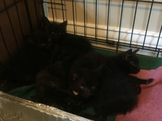 Kittens found in lumber shipment from Louisville