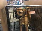 PHOTOS: Furry faces at Indy Mega-Adoption event