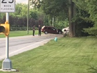 PD:Child killed in crash not properly restrained