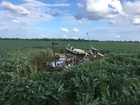 Pilot escapes after helicopter crashes in field