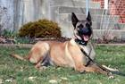 Hendrick's Co. K-9 died from GDV, not heat