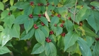 Proposal bans sale of invasive plants in Indiana