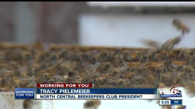 Fishers beekeepers want to change city ordinance to allow them to ...