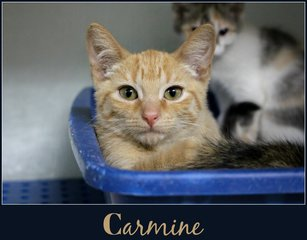 Animal Shelter in desperate need of cat food