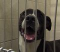 IACS offers free adoptions before Thanksgiving