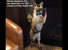 St. Elmo offers reward for return of stolen fox