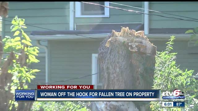 Woman off the hook for fines for fallen tree