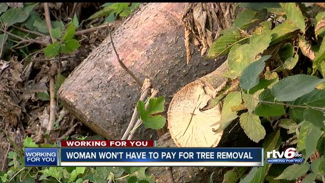 Woman off the hook for fines from tree left in yard by IPL- still may be…