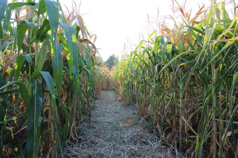 5 awesome corn mazes to visit in central Indiana this fall - TheIndyChannel.com ...