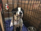 Pets available at Indy Mega-adoption event