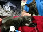 Deputy rescues kitten abandoned in trash