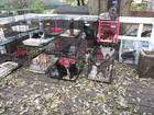 Police remove 47 cats, 6 dogs from filthy home